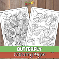 Butterfly coloring pages for adults and kids