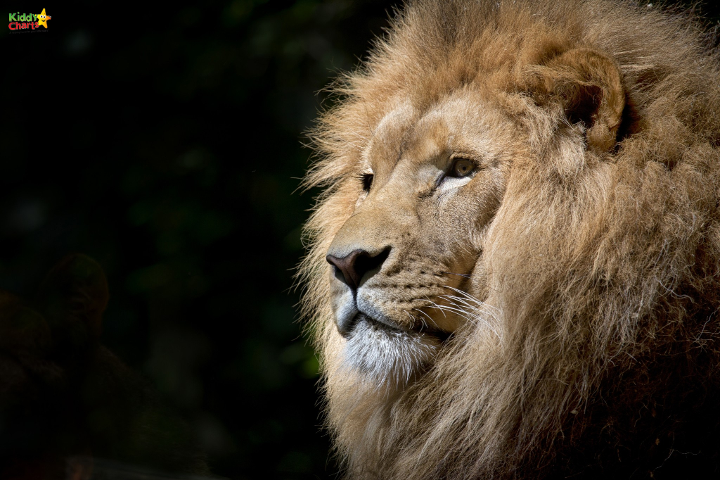Visit Africa Alive and see some of the big 5 - Norfolk with kids wouldn't be the same if you didn't! Check out other ideas on the site too. #norfolk #kids #uk