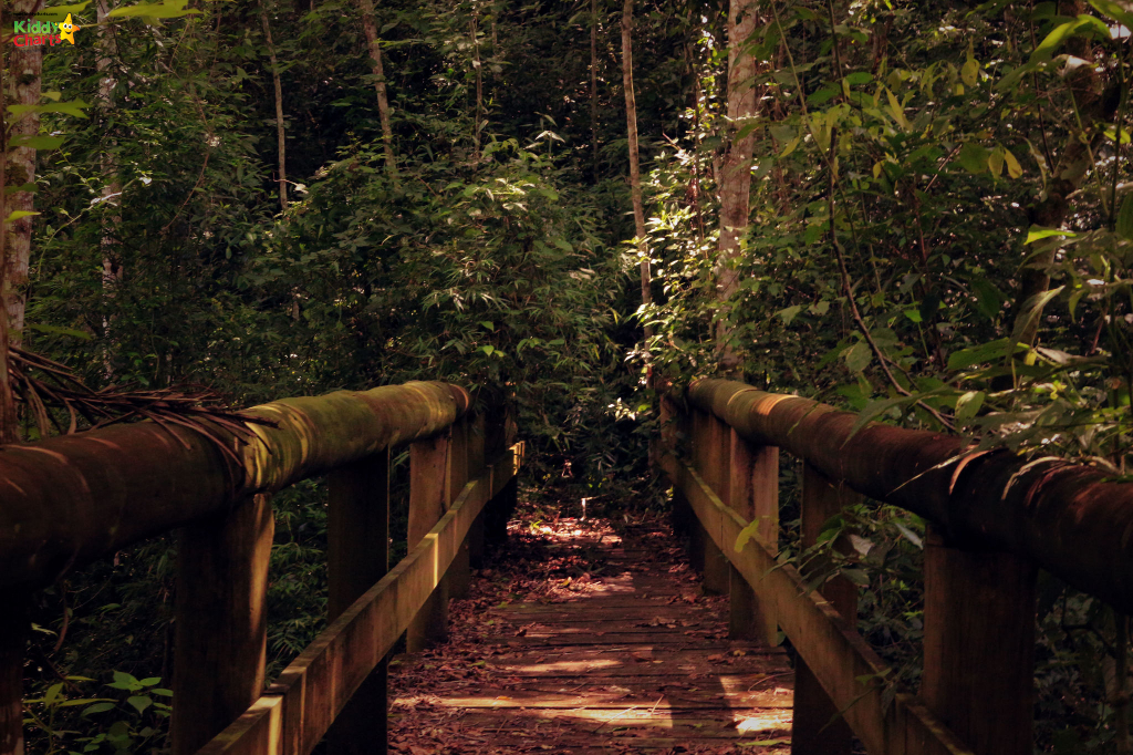 Bewliderwood; another great things to do in Norfolk with kids. Check out our other ideas #norfolk #bewilderwood