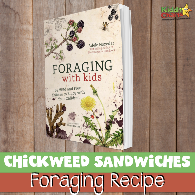 Why not check out our chickweed sandwiches recipe? #foraging #recipes #nature