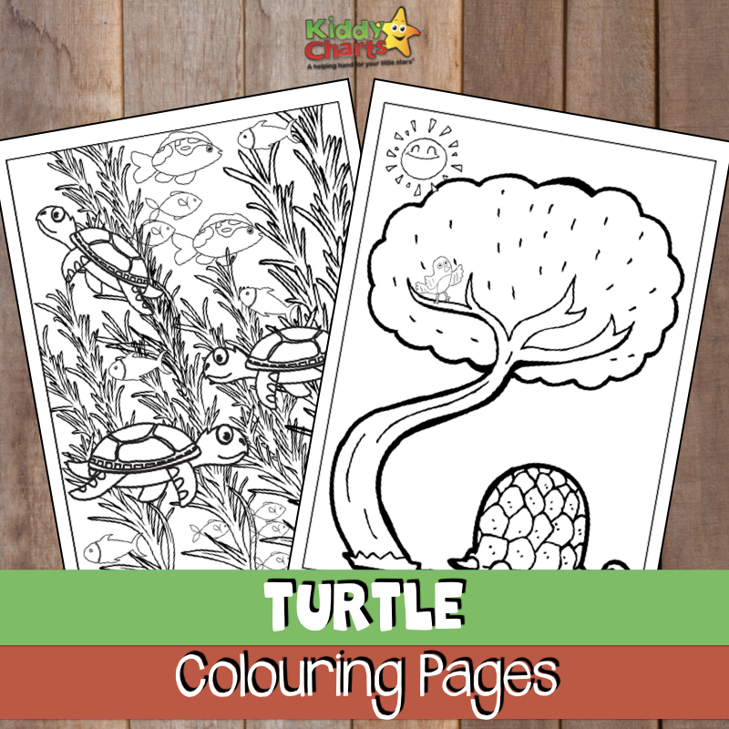 Turtle Coloring Pages For Kids And Adults Too