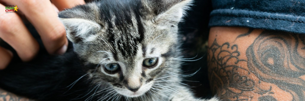 Looking to get a cat? We LOVE ours, and we've got 7 reasons why we won't ever regret it with our kids too. #cats #kids #pets #learning