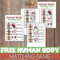 Human body matching game - Free printable