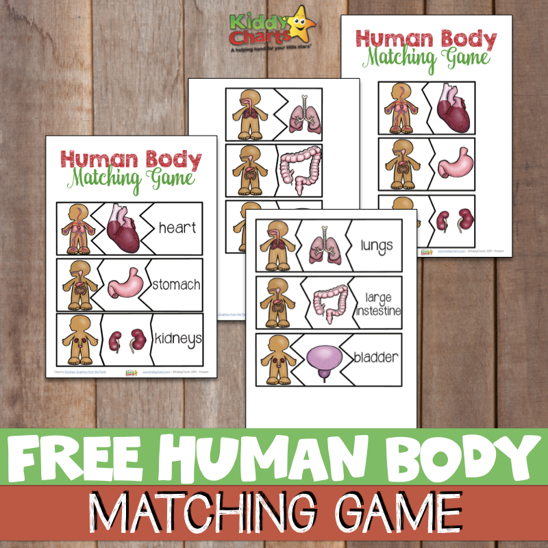 Human body matching game - examples sheets for you for STEM learning.