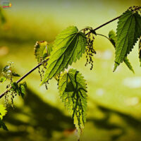 3 ways of teaching kids about the garden