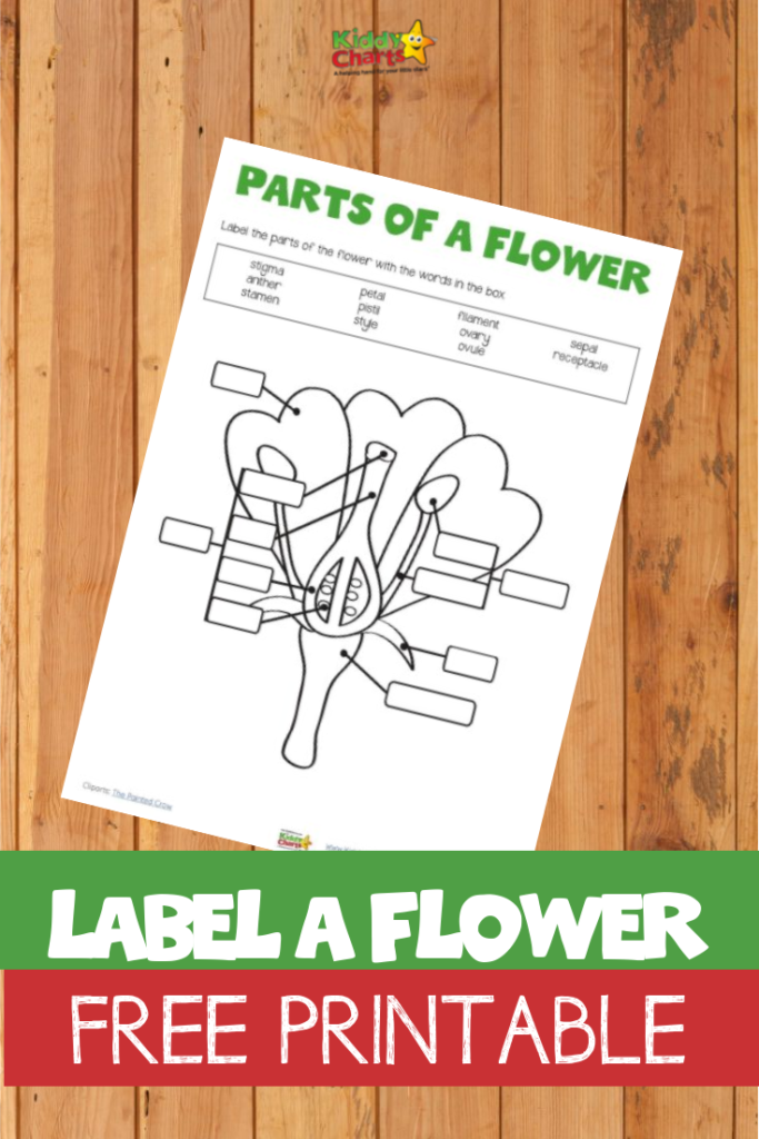 Label a flower free printable will teach your kids all about flowers and their parts and purpose.
