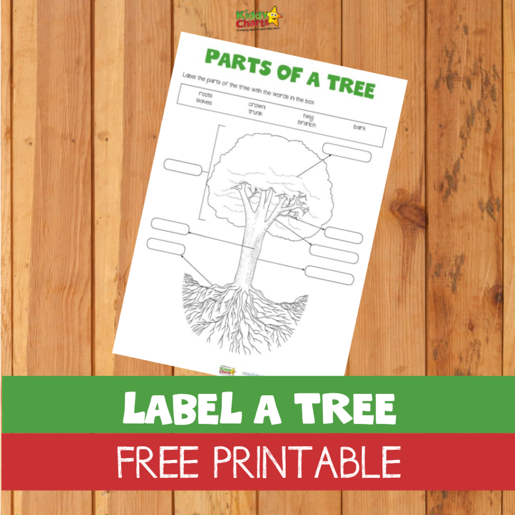 Label a Tree free printable for kids