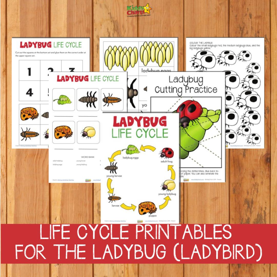 Ladybug life cycle printable examples.