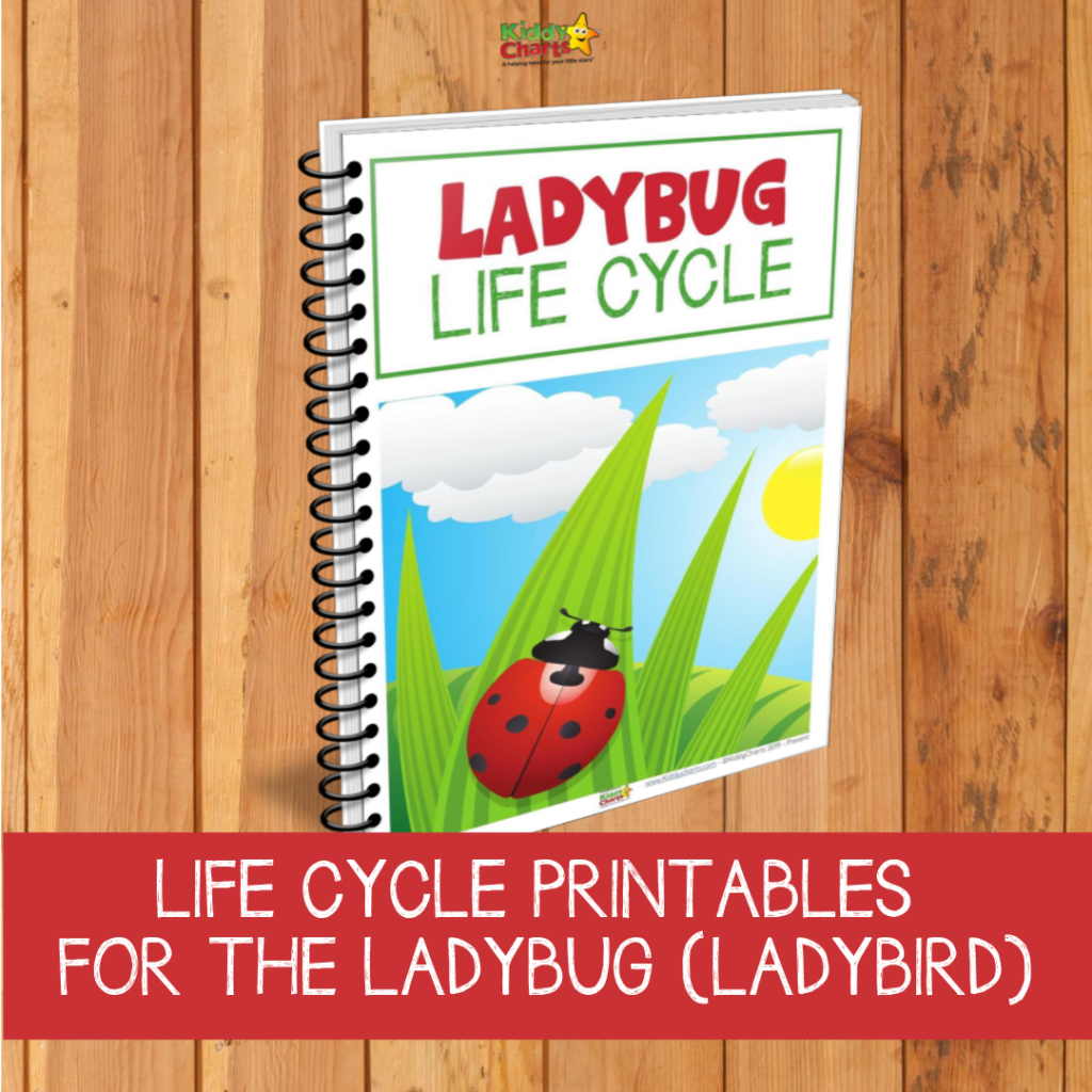 Ladybug life cycle printables and resources for kids
