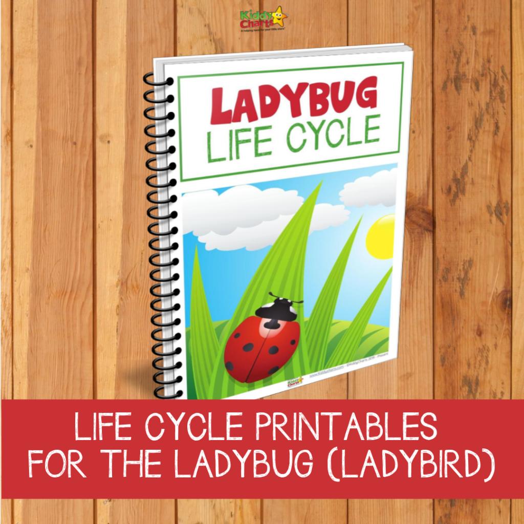 Ladybug life cycle printables and resources for kids