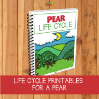 Pear lifecycle activities for STEM plant learning play for your kids today