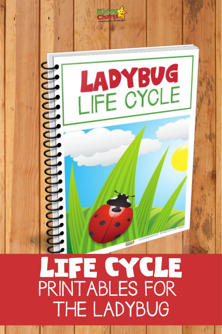 Ladybug life cycle eBook cover.