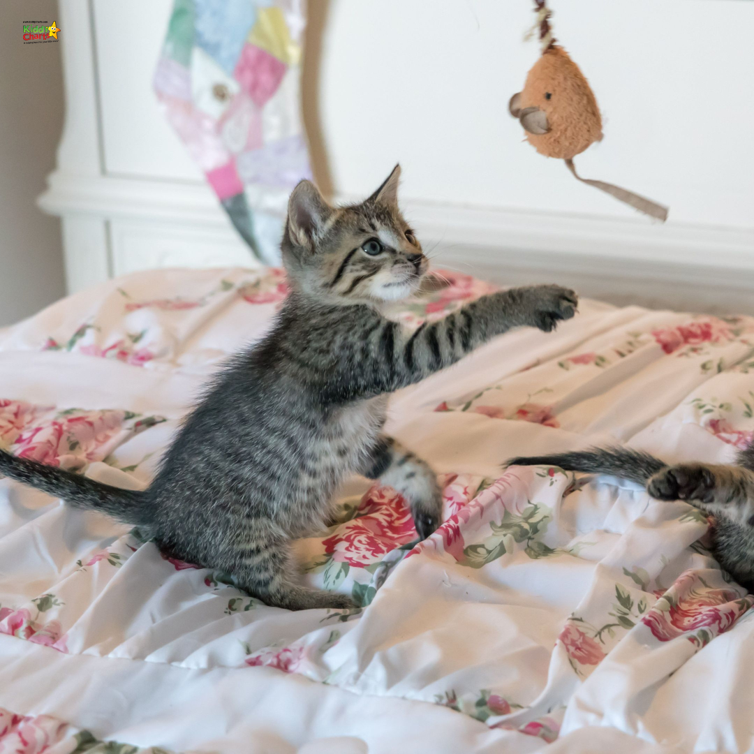Kitten playing with a toy mouse on the bed.