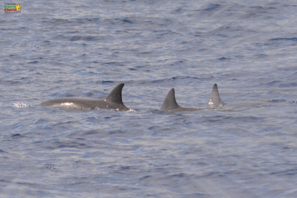 Dolphins while cruising to Ile aux Benitiers and Crystal Rock in Mauritius.