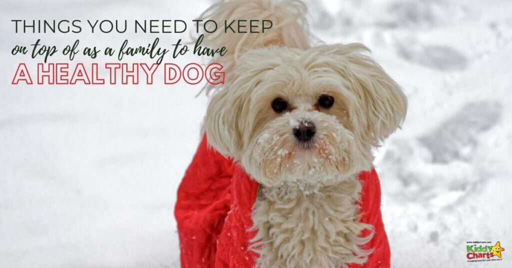 Here is what we have learned about how to have a healthy dog!