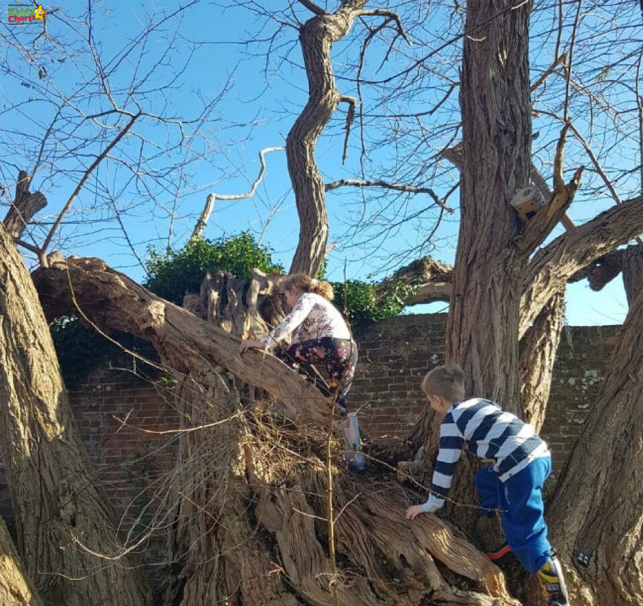 kids climbing a tree in nature