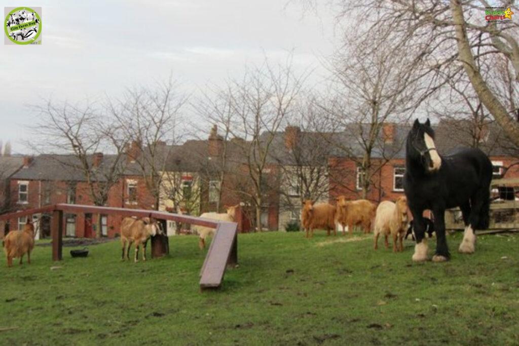 Kentish Town City Farm in London