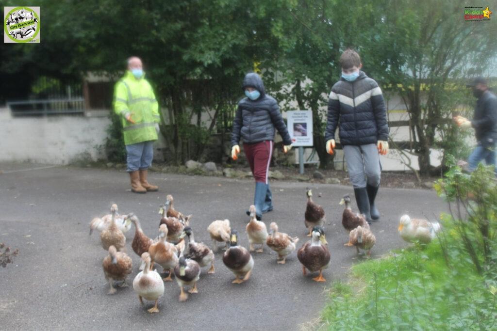 Swansea Community Farm in Wales