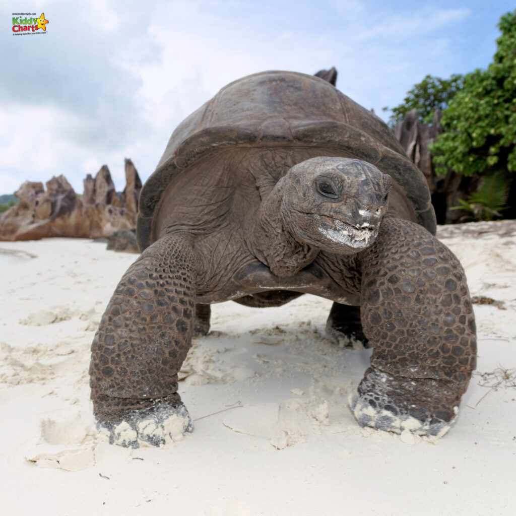 See tortoises in the Seychelles with kids
