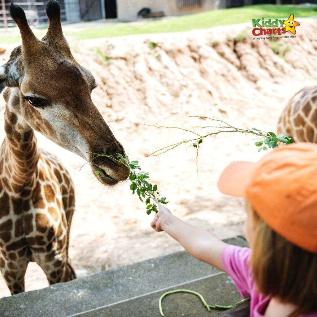 Go to the Zoo with kids in Houston