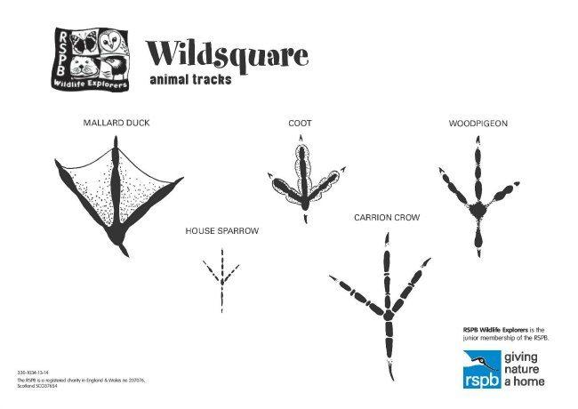 Animal Tracks 1