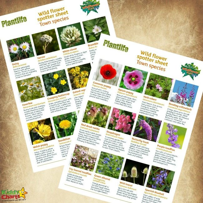 Free Wildflower Identification Printables for Kids
