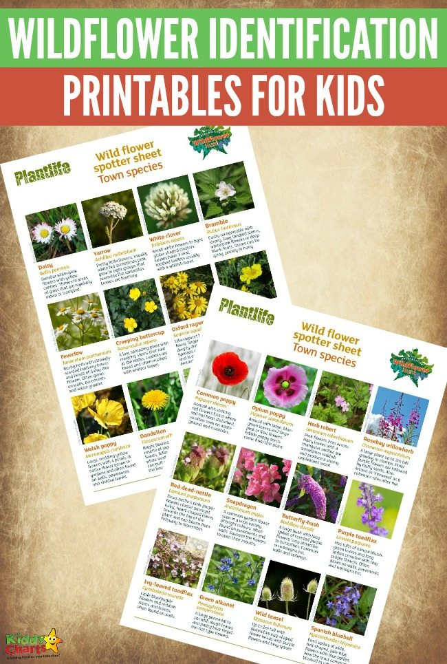 Free Wildflower Identification Printables