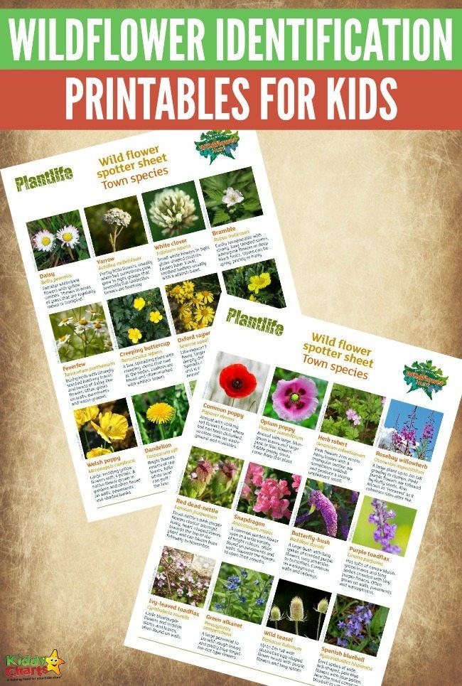 Free Wildflower Identification Printables