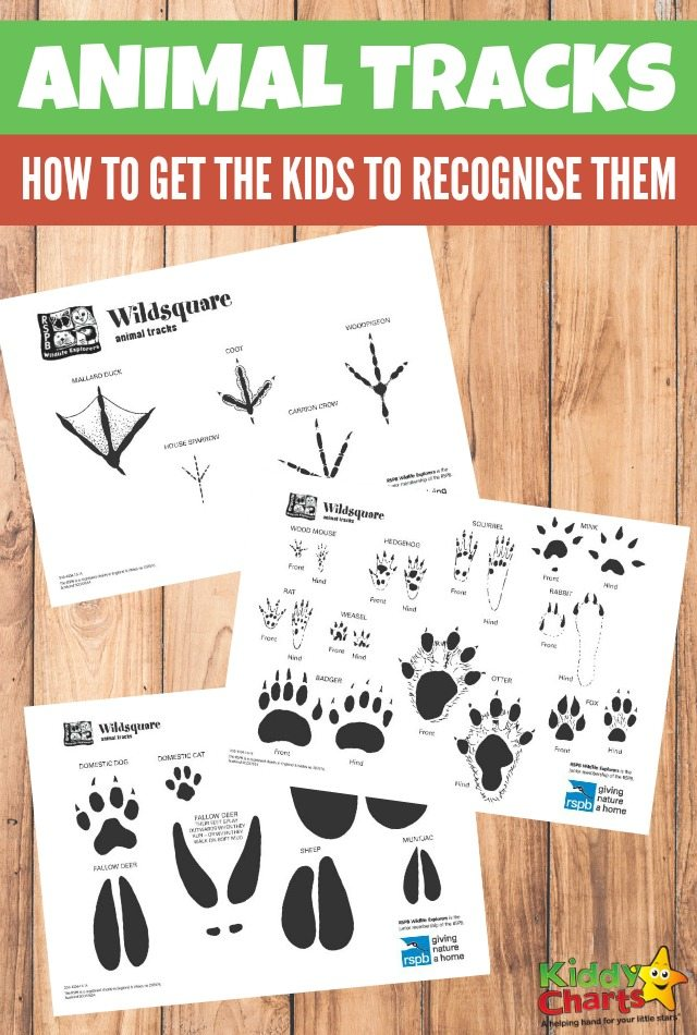 How to get your kids to recognise animal tracks.