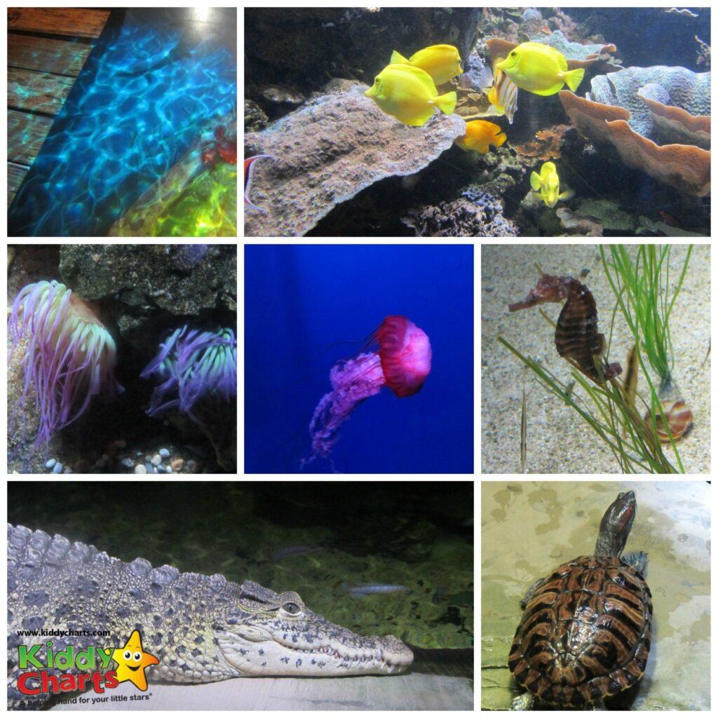London-Aquarium-Collage