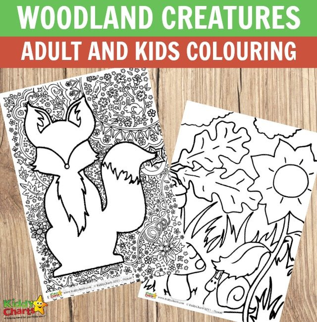 Woodland creatures adult and kids colouring pages