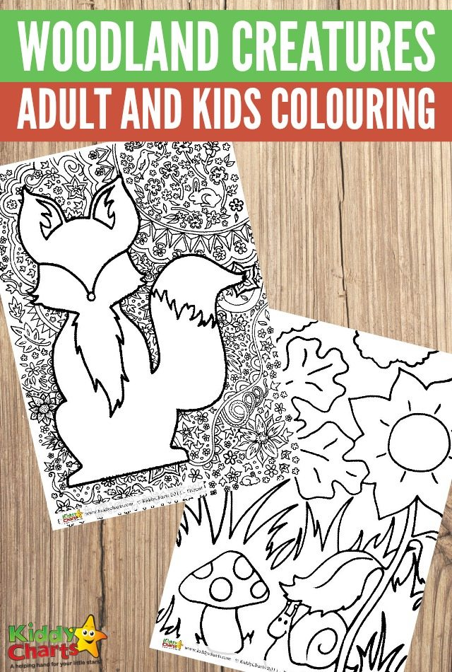 Woodland creatures adult and kids colouring