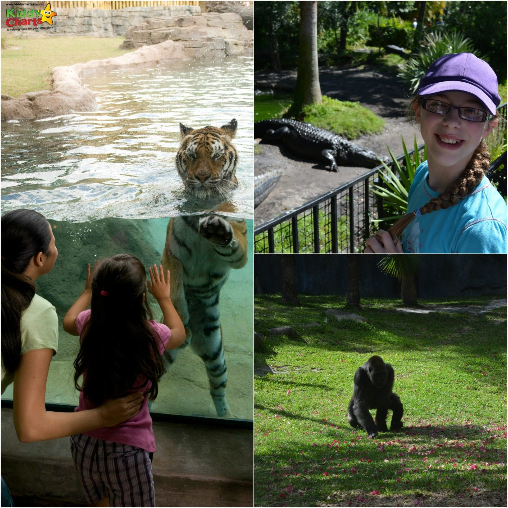 The animals alone are well worth a visit to Busch Gardens Tampa - why not check out the other reasons on my site?