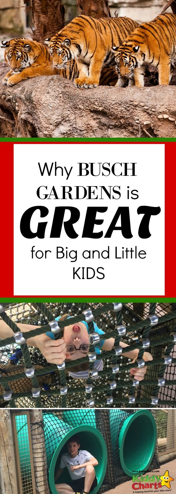 Busch Gardens Tampa is a perfect place to go, both for the big and little kids in the family - why not pop over to the site and find out why?