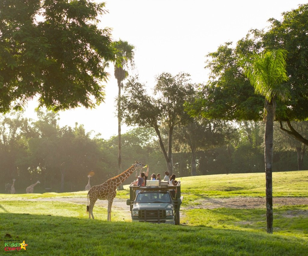 Busch Gardens Tampa do offer safari trips to get a little closer to the animals....