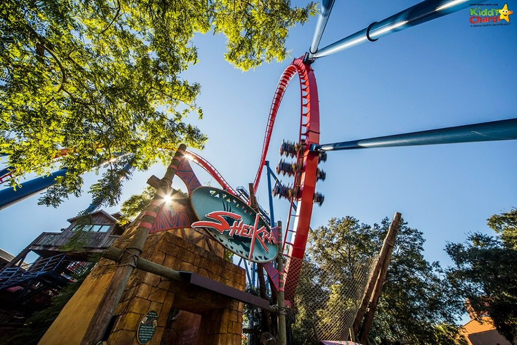 So - do we really need to say more about the Busch Garden Tampa SheiKra ride?