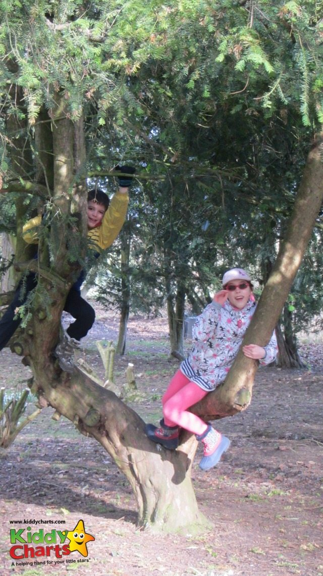 Plenty of opportunities for tree climbing at Easton Lodge too....