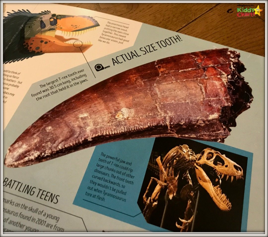 Oh my - now that tooth would scare me?!!? From the Dinosaur Atlas from Lonely PLanet Kids #reading #books #kids #dinosaurs