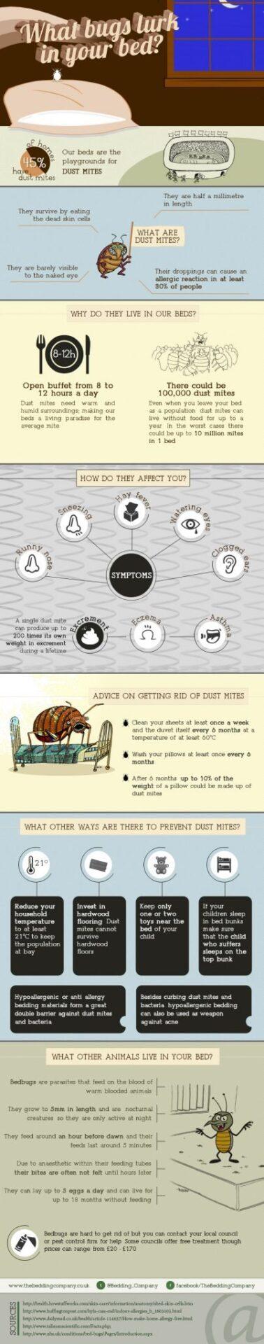 Dust mites: Infographic