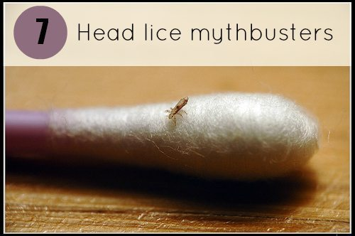 Head Lice Mythbusters
