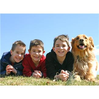 20 free things to do in the summer holidays - walking a friends dog