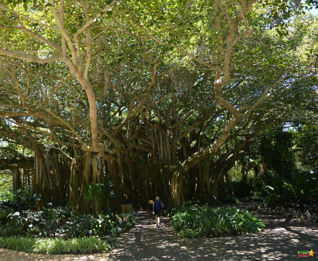 The Banyan tree in Loegoland Florida is just stunning - a really beautiful sight, and almost worth going to the park for on its own....