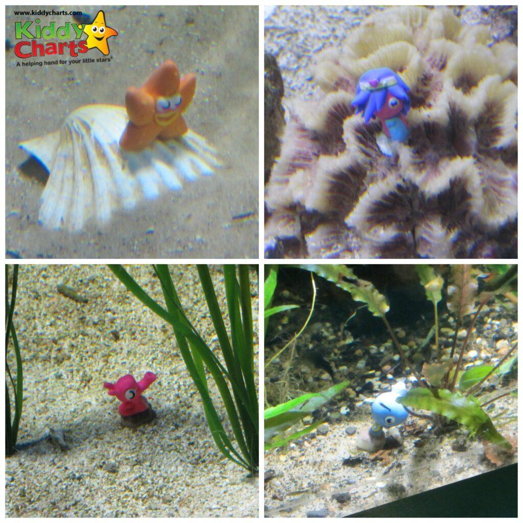 London Aquarium: Moshis in tanks