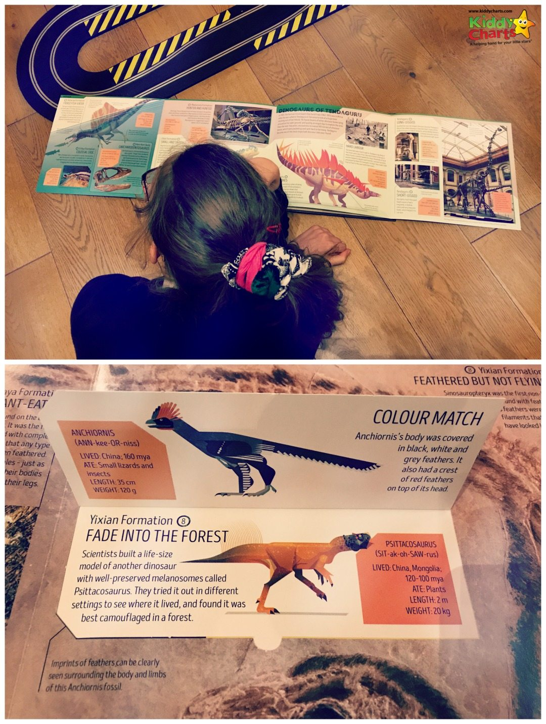 Reading the Dinosaur Atlas and messing with the pop ups! #reading #kids #dinosaurs