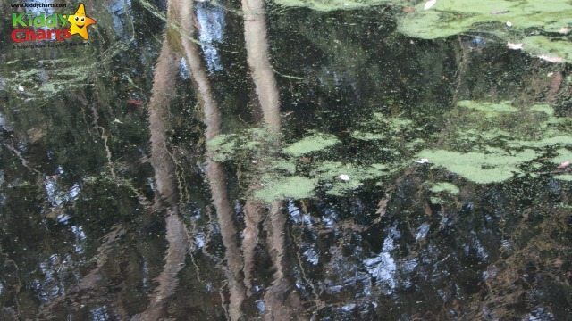 The Pond at Great Easton lodge - reflections