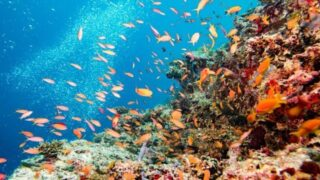 Visiting Cades Bay and snorkelling in Cades Reef, Antigua
