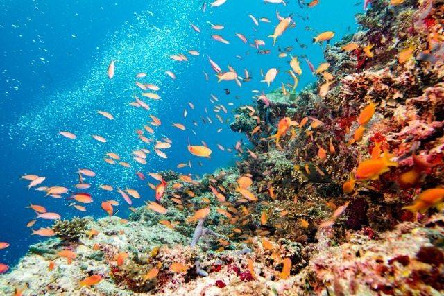 Reef underwater scene from stock photos.