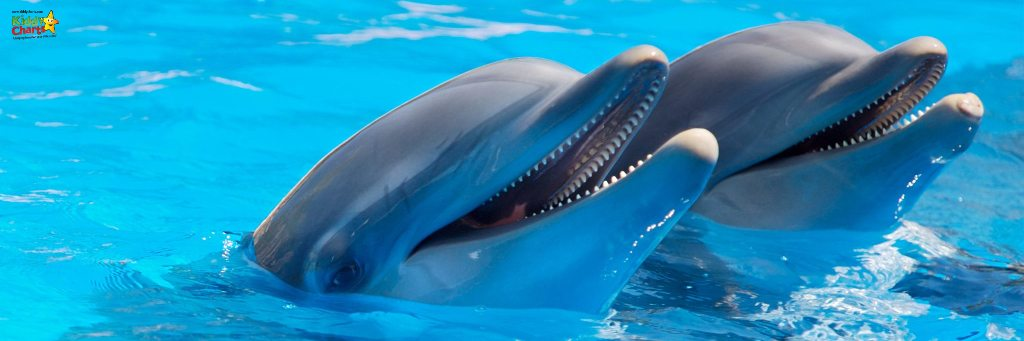 Dolphins in the water - which is one of the things to do in Jamaica with Kids thanks to Dolphin Cove.